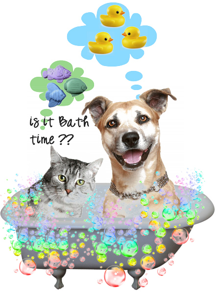 Flea Dips and Flea Treatments for Cats and Dogs