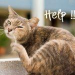 Fleas can Kill Kittens, Get Rid of Cat Fleas