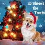 Winter Holiday Hazards for Your Pet