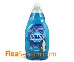 Dawn dish soap with water for a Flea bath