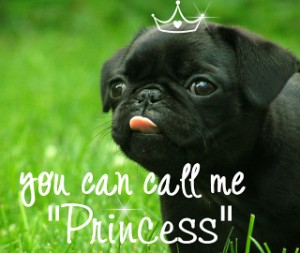 Cute Pug dog - You Can Call Me Princess