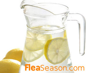 Homemade Lemon water as a Flea Spray