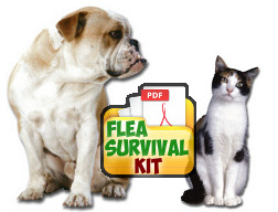 Flea Survival Kit