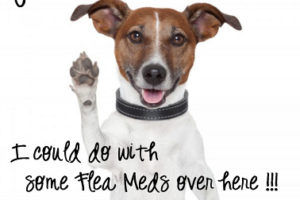 Retail Flea and Tick Treatment Comparison Chart