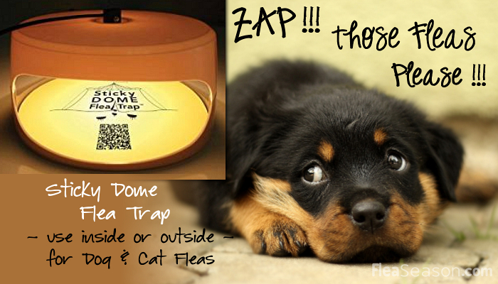 Sticky Dome Flea Trap kills Fleas using Heat