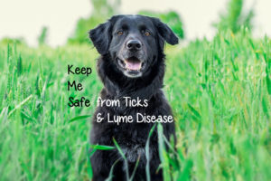 Tick Transmitted Lyme Disease in Dogs and Cats