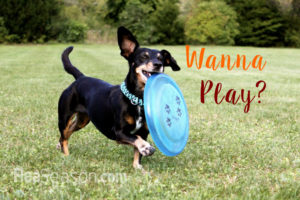 Dog Frisbees for Fun in the Outdoors
