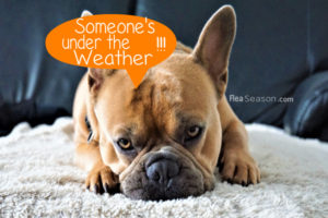 Have No Regrets When it's Time to Get Your Pet Medical Treatment