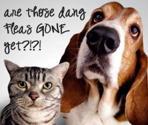 Diatomaceous Earth food grade gets rid of dog and cat fleas