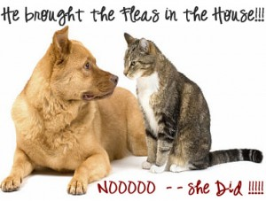 Dogs and Cats bring Fleas into the house