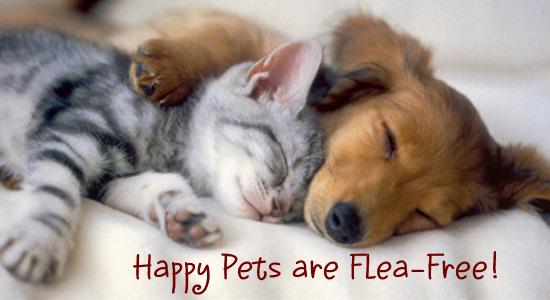 Happy pets are flea free