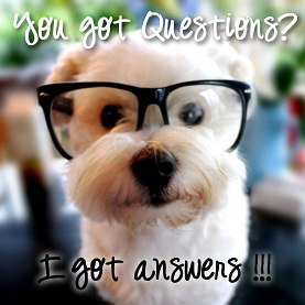 Flea Questions and Answers