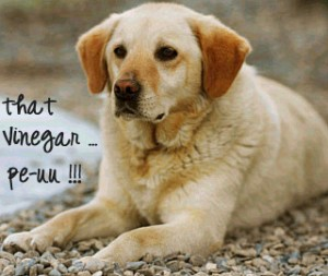 Vinegar bath on dogs helps Flea control
