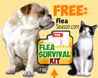 open the Flea Survival Kit in pdf and print