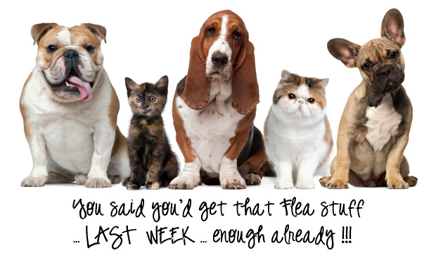 Dog and Cat Retail Flea treatment comparison chart