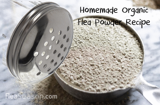 Make at Home Organic Flea Powder for Cats and Dogs using 3 ingredients.